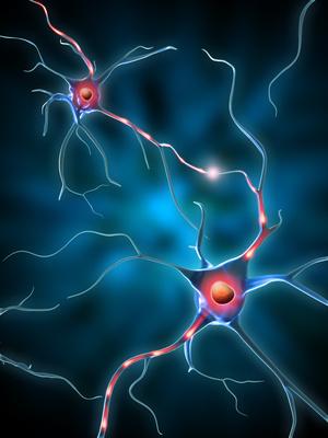 Les neurones miroirs le blog des rapports humains for Neurones miroir
